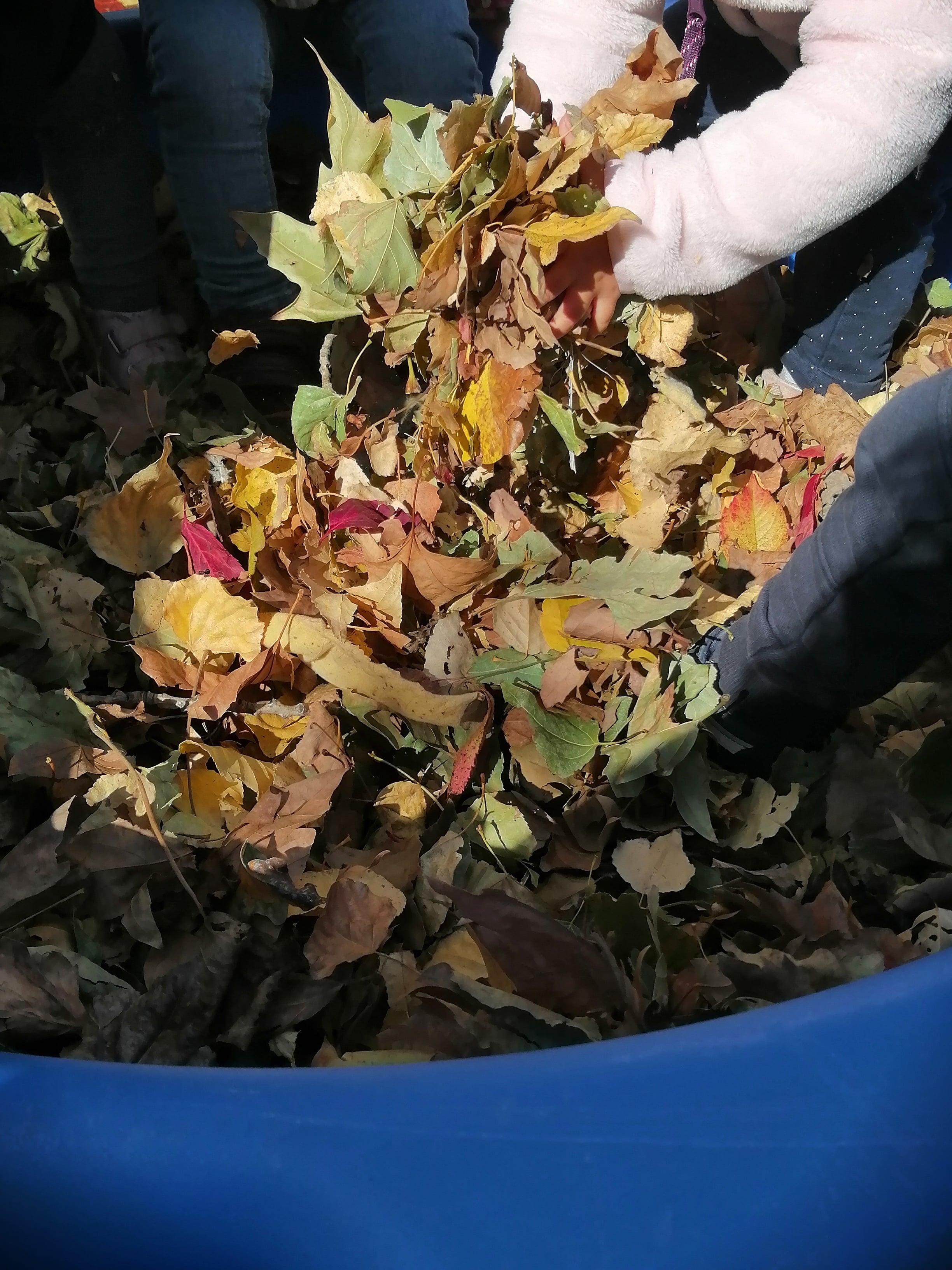 piscine de feuilles