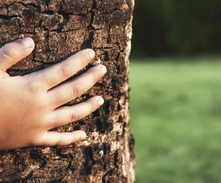 petite main sur un arbre